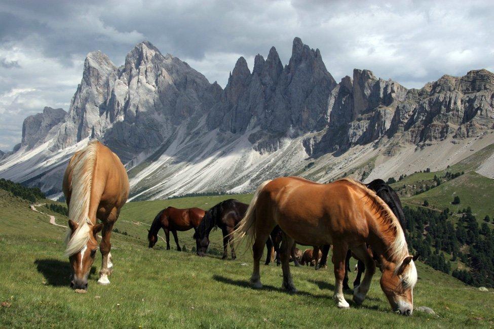 Cavalli in Funes